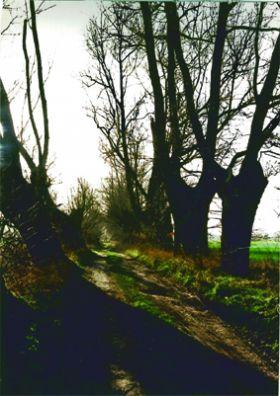 Der Baumgeisterweg bei Wilsen