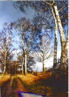 Ein freundlicher Weg mit hellen Bäumen